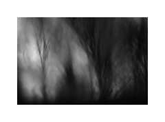 Black Forest #2 (ICM's & Polaroids) Tags: icm intentionalcameramovement painterly multipleexposure blackandwhite bw blur abstract longexposure landscape woodland forest