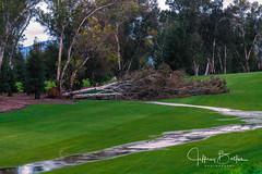 After the Rains-3938 (Jeffrey Balfus (thx for 3.3 Million views)) Tags: sonyalpha saratoga california unitedstates us