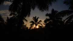 Silhouette sunrise (FlorianMilz) Tags: ratnapuradistrict srilanka lk sunrise sun early morning silhouette black orange blue sky mood tropic