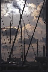 Foresta di alberi. (barbaracoccigatti55) Tags: porto portoantico genova tramonto sunset liguria barche alberi vela