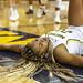 JD Scott Photography-mgoblog-IG-Michigan Women's Basketball-University of Indiana-Crisler Center-Ann Arbor-2019-42