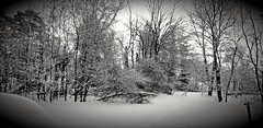 A cold winter's morning (the_maria_medic) Tags: antrimcountymi snowymorning cold winter wintermorning sunup