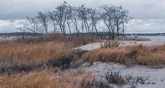 _DSC0062-2 (johnjmurphyiii) Tags: 06516 autumn beach clouds connecticut longislandsound originalnef sky tamron18400 usa westhartford westhaven johnjmurphyiii