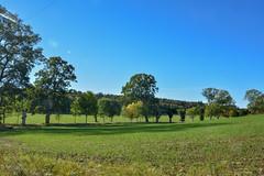 016-2 (Monica Westerholm) Tags: ekebyhov stockholm sverige sweden natur nature träd gräs himmel