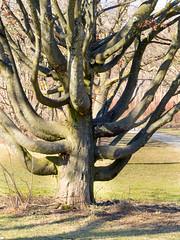 Special Tree (Wolkenkratzer) Tags: munich münchen neuperlach hugolangbogen tree park