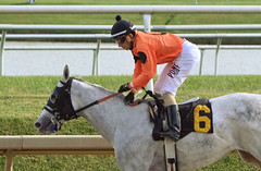 "2016-11-06 (94) r4 Alex Cintron on #6 Spectacular Me for the win (JLeeFleenor) Tags: photos photography md maryland marylandracing marylandhorseracing equine laurelpark laurelracecourse outside outdoors jockey جُوكِي ""赛马骑师"" jinete ""競馬騎手"" dżokej jocheu คนขี่ม้าแข่ง jóquei žokej kilparatsastaja rennreiter fantino ""경마 기수"" жокей jokey người horses thoroughbreds equestrian cheval cavalo cavallo cavall caballo pferd paard perd hevonen hest hestur cal kon konj beygir capall ceffyl cuddy yarraman faras alogo soos kuda uma pfeerd koin حصان кон 马 häst άλογο סוס घोड़ा 馬 koń лошадь"