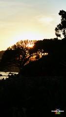 #sunset #atardecer #sun #sol #calelladepalafrugell #costabrava (ldomenech33) Tags: sun costabrava sunset calelladepalafrugell sol atardecer arbol tree mar sea