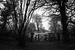The World Beyond (JamieHaugh) Tags: cirencester gloucestershire cotswolds england uk gb britain outdoors nature sony alpha ilce7rm2 a7rii zeiss trees gate blackandwhite blackwhite black white monochrome bw mono field distance landscape horizon path pathway world beyond obstacle woodland woods