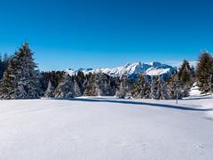 Winterwonderland (oonaolivia) Tags: feldis graubünden grisons schweiz switzerland landschaft landscape nature berge mountains snow hiking walking winter