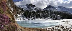 forse (art & mountains) Tags: alpi alps orobie brembana cime creste roccia hiking rifugiocalvi bosco abeti disgelo natura silenzio contemplazione erica esc esp vision dream spirit armonia