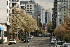 Early Spring Seattle Views 14 (C.M. Keiner) Tags: seattle washington usa city cityscape skyline mountains pacific northwest puget sound spring trees blossoms urban magnolia streetscape cherry