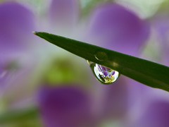 Orchidee! (Tom Helleboe) Tags: