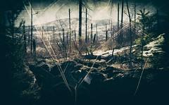 A Lovely Stroll (Crusty Da Klown) Tags: okanaganmountianprovicialpark lovely stroll mountian forest wilderness trees log britishcolumbia bc canada outdoors outside walk hike film kodak canon snow burned burnt landscape scenery view