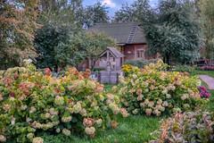 Warm august evening (KonstEv) Tags: tree garden flower bush village house moscow russia well flowering zeiss makroplanar