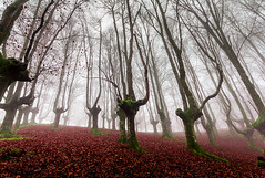 URKIOLA LAIÑOA 10 (juan luis olaeta) Tags: paisajes landscape forest bosque basoa pagoa natura fog laiñoa nieblas hayedo canoneos60d canon photoshop lightroom urkiola