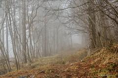 Magla na Učki (2) (MountMan Photo) Tags: učka istra primorskogoranska croatia landscape planina mountain magla fog šuma forest flickrunitedaward