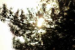 A Sunshine a day... (Dirk A.) Tags: a sunshine day