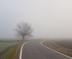 Albero solitario (Aellevì) Tags: solo nebbia inverno strada righe