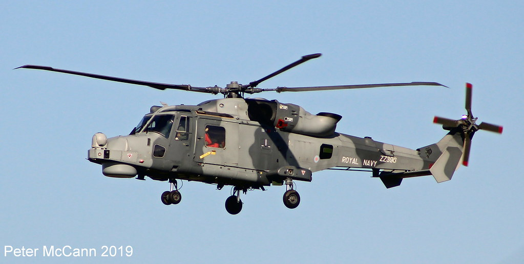 The World's newest photos of wildcat - Flickr Hive Mind