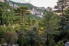 Bosque de la Tinença (Francisco Chornet) Tags: tinença castellón tarragona comunidadvalenciana españa bosque otoño senderismo montaña paisaje landscape mountain a7 sonyfe41635