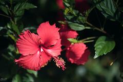 Maui2019 (7 of 46) (bcdixit) Tags: nikond750 hawaii maui