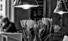 B&W tulips (akatsoulis) Tags: nikkor nikoneurope nikonuk tulips oxford bokeh nikkor50mm14g nikon d5300 blackandwhite flowers coffeetime