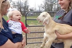 Funny Baby and Goat Video (videosloving) Tags: babies baby babyanimals goats cutebaby cuteanimals justforfun justforlaugh amazing compilation animalslove animals cute viralvideo video videosloving viral new latest laughter trending trynottolaugh
