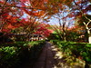西芳寺(苔寺) Moss garden of Saihoji (Eiki Wang) Tags: 西芳寺 西芳寺さいほうじ 苔寺 苔寺こけでら kokedera momiji kyoto 京都 紅葉 楓 世界遺產