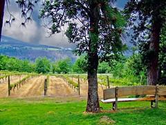A good place to wait. Hood river, Oregon (mtm2935) Tags: vinos pacific west wines portland pinotnoir hoodriver vineyard wine willamettevalley oregon