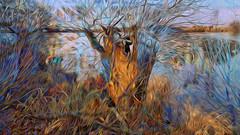 Bildschichten Am Fluss 30 Wieltsee (wos---art) Tags: bildschichten fluss river wasser water unterwasser underwater gestrüpp bäume baum verbrand ausgehöhlt rus äste ufer