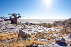 Sun Burst on the  Makgadikgadi_6898 (hkoons) Tags: kubuisland kukomeisland lakemakgadikgadi lekhubuisland makgadikgadipan nationalpark nxaipannationalpark nxaipan southernafrica suapan africa baobab botswana sowa sua tree ancient arbor bloom blossom branch branches bud buds canopy color flora flower green growth large leaf leaves limb limbs old outdoors pan panorama roots soil stem sun sunshine trees trunk