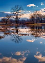 Wetland Reflections (dngovoni) Tags: virginia virginiaarboretum arboretum landscape sunrise trees water winter