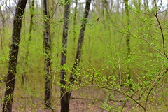 Green spring (lauren3838 photography) Tags: tamron2875mm28 tamron spring leaves landscape georgia tree forest ga d750 nikon ilovenature nature colorful colors green catchycolorsgreen