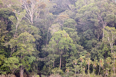 São Gabriel da Cachoeira-AM (Johnny Photofucker) Tags: sãogabrieldacachoeira am amazonas amazon amazônia floresta florestaamazônica forest foresta lightroom 100400mm rainforest selva jungle giungla brasil brazil brasile verde green wildlife tree árvore árvores trees albero alberi