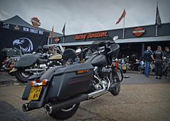 Back 2 Black.. (Harleynik Rides Again.) Tags: back2black harleydavidson motorcycle biker harleynikridesagain nikondf