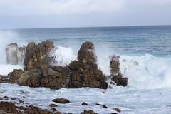 IMG_9793 (mudsharkalex) Tags: california pacificgrove pacificgroveca