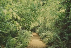(rqlevy) Tags: 35mm film analog olympicpeninsula washington forest pacificnorthwest hiking nature landscape travel