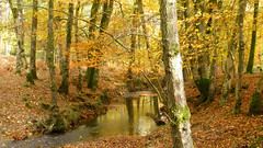 New Forest, Hampshire, UK (east med wanderer) Tags: england hampshire newforestnationalpark nationalpark highlandwater lyndhurst oak beech silverbirch autumn stream