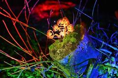 New Life. (martbarras) Tags: takumar lightpainter worthing shoreham brighton martbarras vintagelens manuallenses tripodswap lightart lensswap f28 14mm samyang f2 55mm lightpainting lightpaint