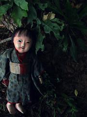Meiji era ichimatsu (☆Cydril☆) Tags: doll antique ichimatsu sakura ningyo japanese