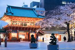 Kanda Myojin Shrine (takashi_matsumura) Tags: kanda myojin shrine chiyodaku tokyo japan ngc nikon d5300 cherry blossoms 桜 神田明神 千代田区 afs dx nikkor 35mm f18g