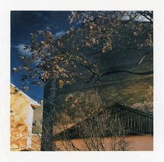*** (Taras Perun) Tags: altprocess alternativephotography gumbichromate