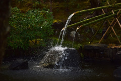 20190328_141_2 (まさちゃん) Tags: 長谷寺 長谷 水滴 水しぶき 水飛沫