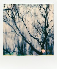 Double Vision. (Diaffi) Tags: doublevision polaroidsx70landcameraalpha1 polaroidcolor600film analog abstract trees water reflection raindrops shadows blur surreal squareformat ishootfilm slr670xmingedition mint timemachine polaroidoriginals