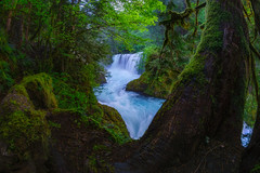Spirit Falls III (PNW-Photography) Tags: spiritfalls washington hiddengem hidden waterscape waterfall water waterfalls stream river creek fisheye moss forest trees rocks lush