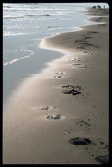 Camargue 1976 (Alberto Cameroni) Tags: cyberviewxv51425 camargue 1976 spiaggia diapositiva pellicola analogica primefilm golfedebeauduc francia saintesmariesdelamer provenza costaazzurra nikkormat kodak orme