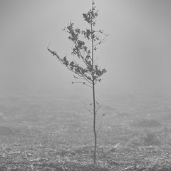 A lone tree. (Karl Horsman) Tags: atmospheric atmosphere fog mist misty woodland woods bracken branches fields eastsussex canon canonuk 5d 70200mm blackwhite foliage ashdownforest countryside wintet