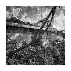 La Reforma II (Sandra Herber) Tags: infrared lareforma maya mayan mexico ruins yucatan