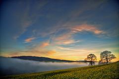 Rolling (Redux) (rmrayner) Tags: hdr devon landscape sliderssunday hss fog oaktrees oilseedrape sunset sky