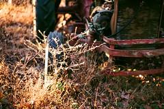 In the Weeds (oh it's amanda) Tags: canonae1 fujicolor200 fuji 35mm canon50mmf18 canonfd50mmf18